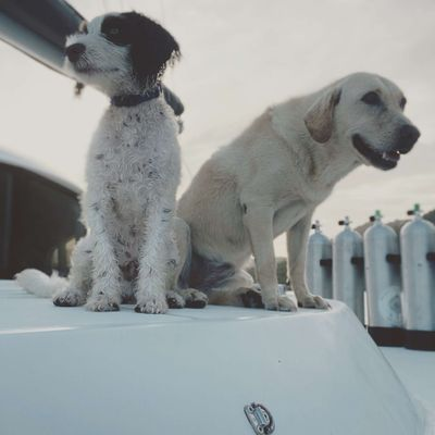 Daisy and Parker - Ship Dogs
