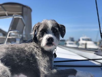 Louie  - First Mate
