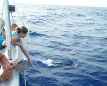MIMBAW Yacht Charter - Dolphin viewing off Mimbaw come join us to experience the ocean up close.
