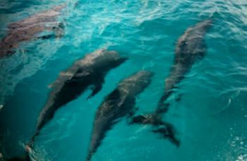 ZEPHYRUS Yacht Charter - Dolphins!!
