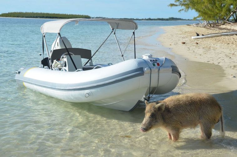 CATATONIC 500 Yacht Charter - Awesome sport tender Kittytonic! (pig not included)