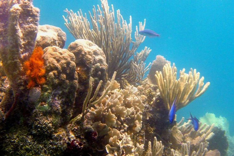 DREAMING ON Yacht Charter - Snorkeling Pompion - White Rock