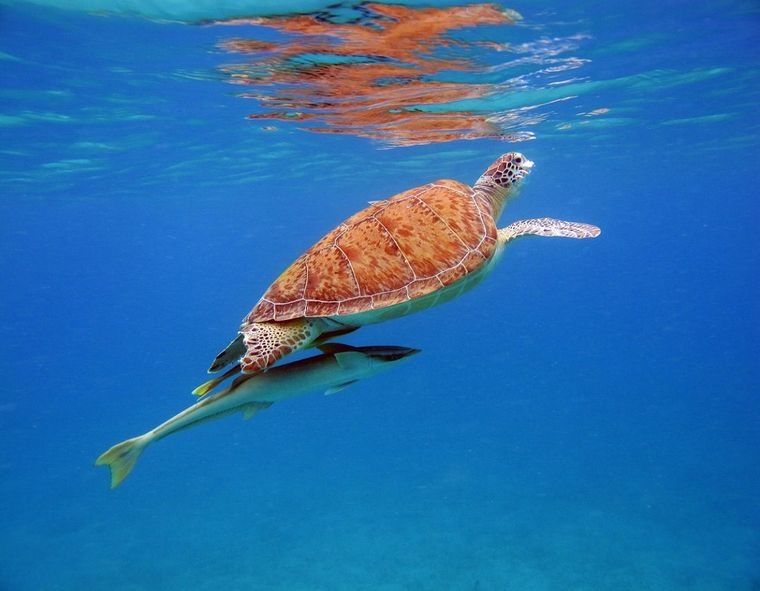 THE BIG DOG Yacht Charter - Turtle with Ramora underneath