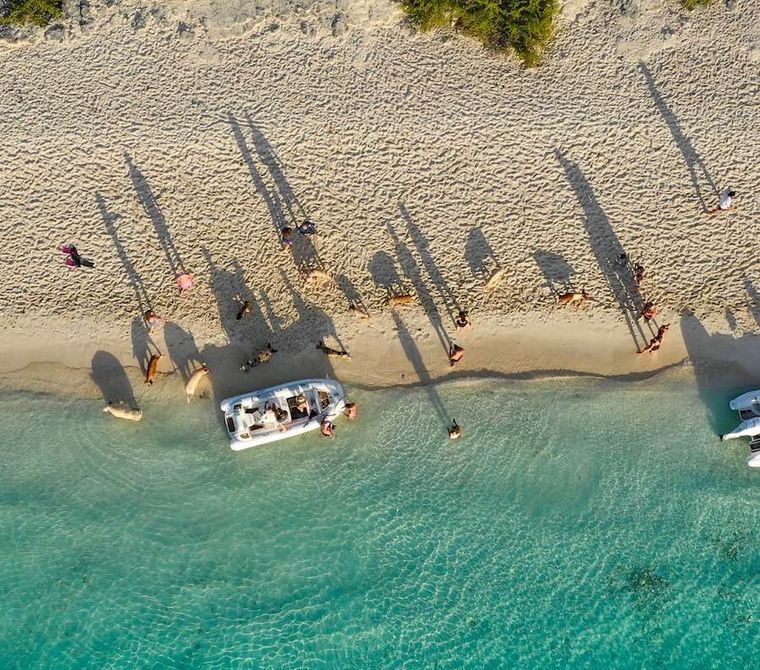 ETERNITY Yacht Charter - The famous swimming pigs