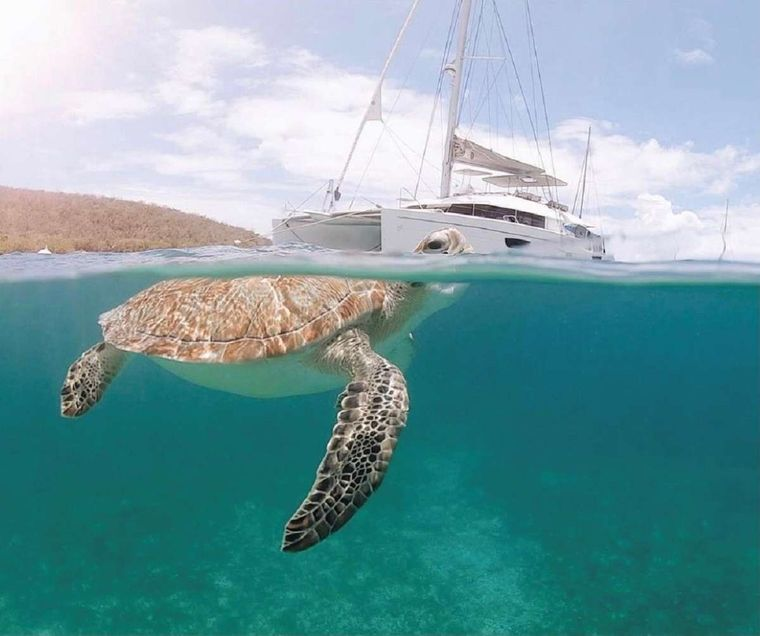 ENCHANTE Yacht Charter - Snorkeling with turtles