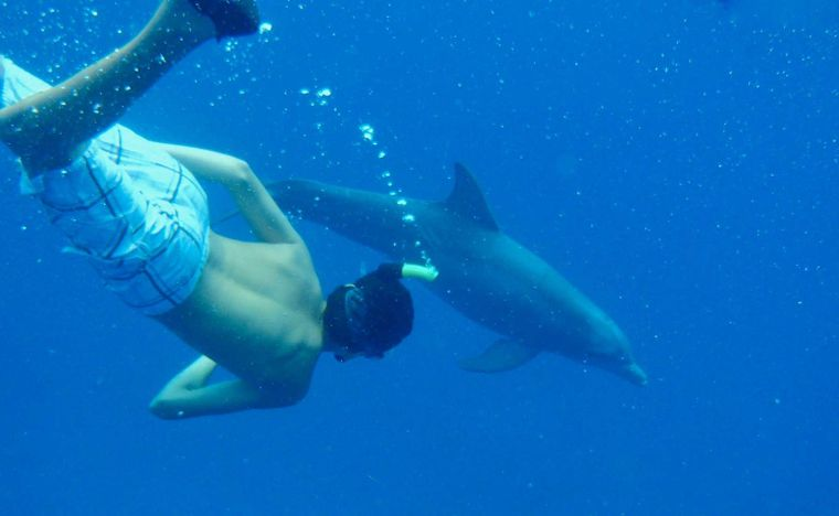 MCGREGOR III Yacht Charter - Swimming with Dolphins
