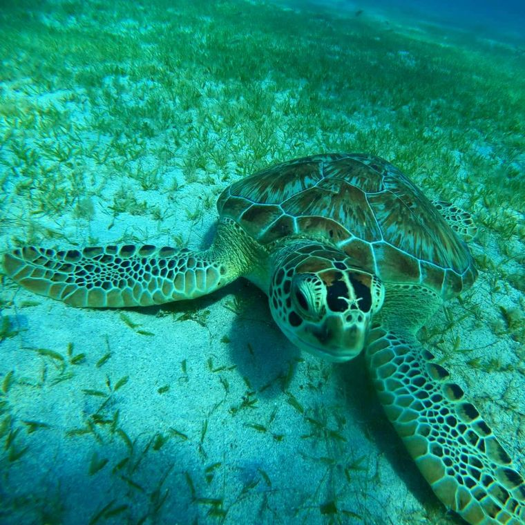 Synergy Yacht Charter - Swim with turtles
